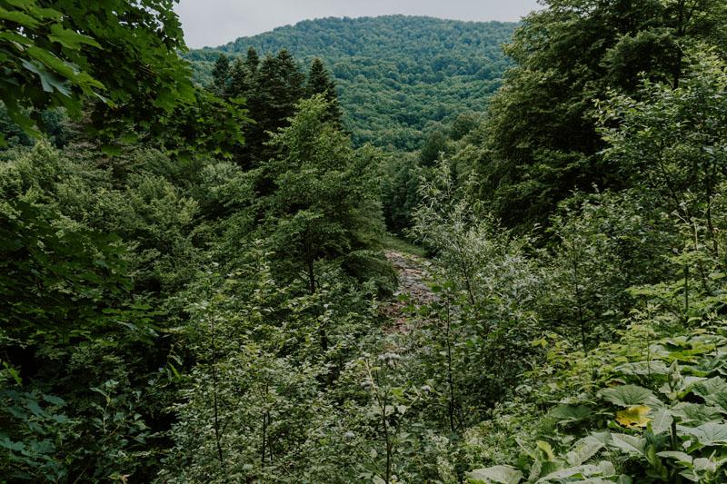 Rezerwat przyrody