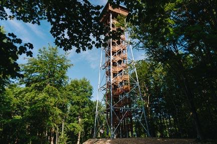Wieża jeleniowaty
