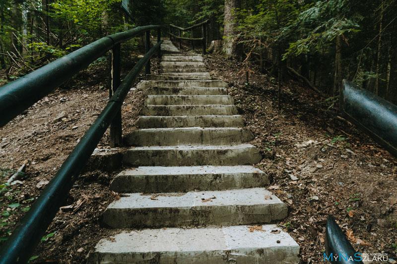 schody w lesie