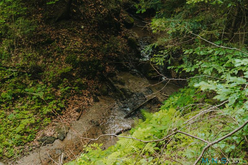 Potok Korzeniecki