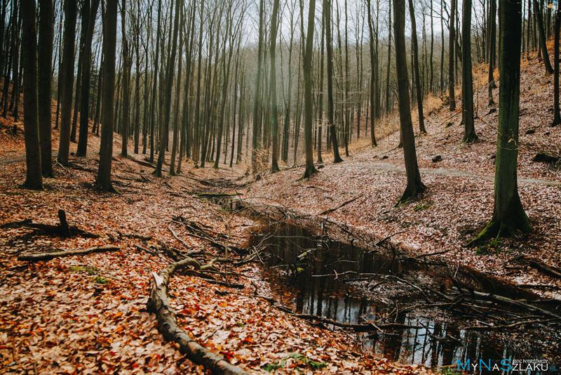 Podróż po atrakcjach Szczecińskiego Parku Krajobrazowego Puszcza Bukowa