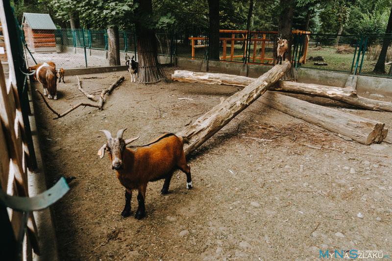 Mini ZOO - atrakcja turystyczna w Żywcu dla dzieci