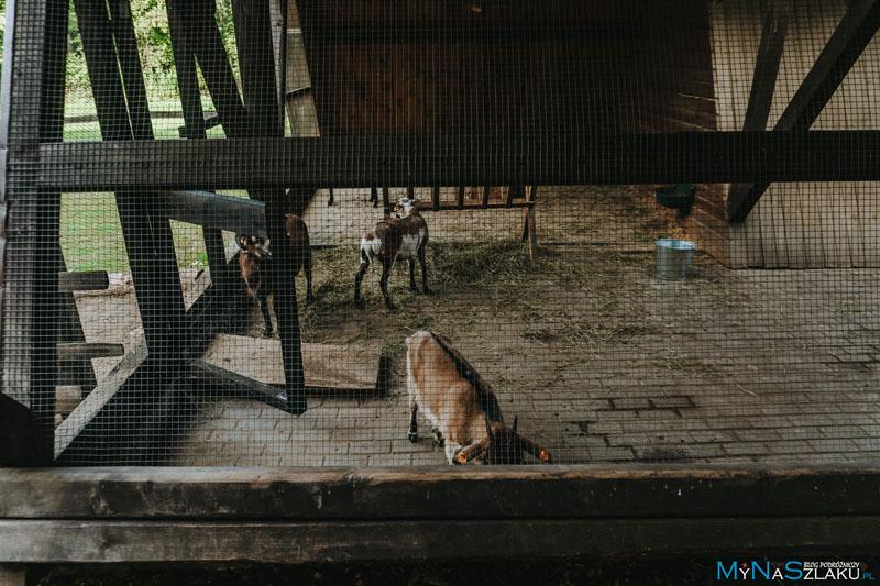 Mini zoo - atrakcja dla dzieci