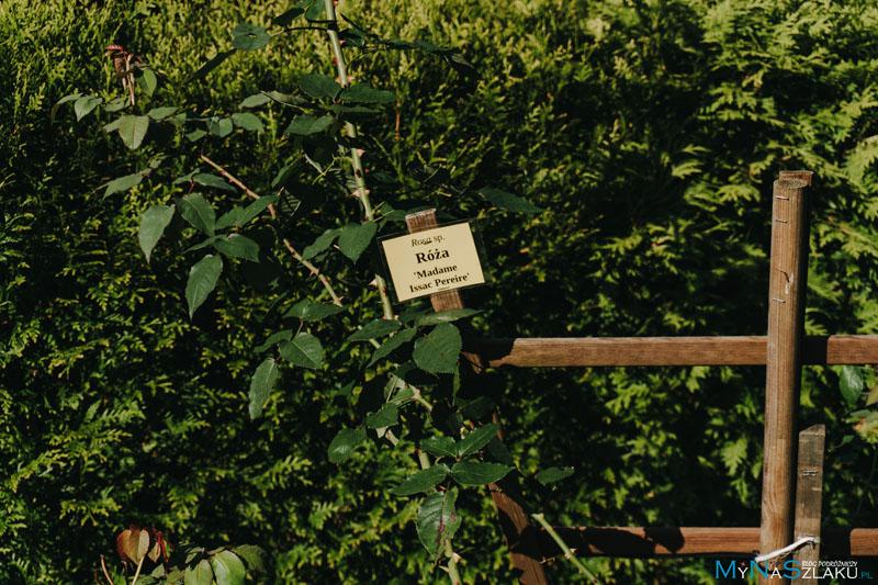 Zaczarowany Ogród w Arboretum Bramy Morawskiej
