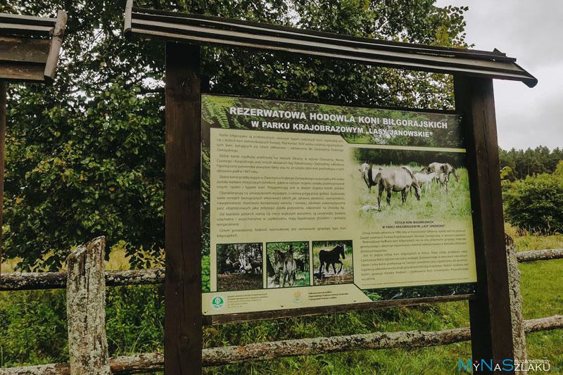 Szklarnia - ostoja konika biłgorajskiego Lasy Janowskie atrakcje