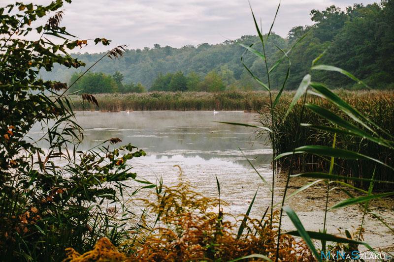 Łężczok to taki rezerwat ptactwa wodnego