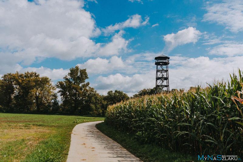 Jak dojść do wieży widokowej?
